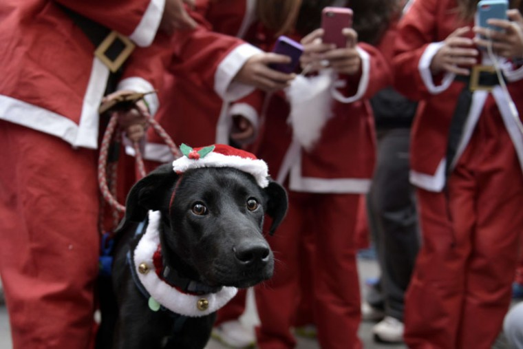 A dog with a Santa Claus hat takes part in the first Athens 'Santa Claus Run' in city's center on December 7, 2014 . (Louisa Gouliamaki/AFP/Getty Images)
