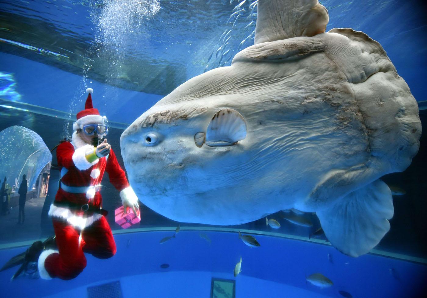Topshots Japan Aquarium Christmas