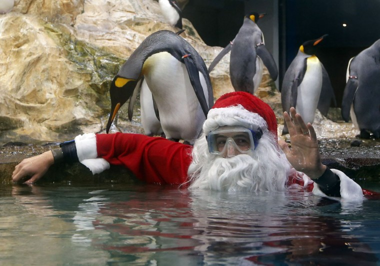 A diver wearing a Santa Claus costume poses with Royal Penguins at the Marineland animal exhibition park in the French Riviera city of Antibes, southeastern France, on December 19, 2014. (Valery Hache/AFP/Getty Images)
