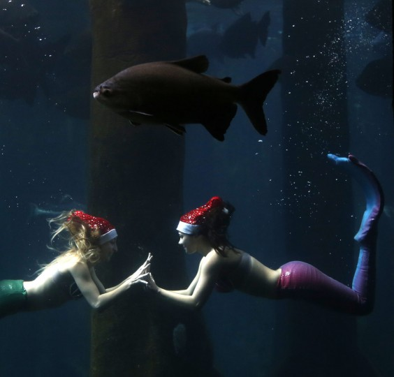 Women dressed as mermaids wearing Santa Claus caps perform next to a Pacu fish inside a tank at the Sao Paulo Aquarium December 17, 2014. According to organizers, the performance aims to narrate about the myth and legend of mermaids. (Paulo Whitaker/Reuters)