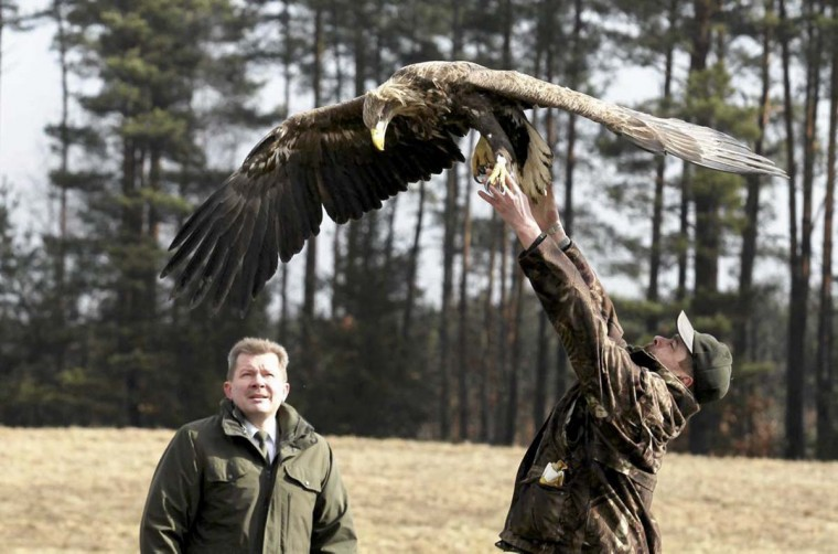 A forester Pawel Bednarczyk (R) releases white-tailed sea-eagle after treatment at the rehabilitation center for birds in Olsztyn December 12.    || PHOTO CREDIT: TOMASZ WASZCZYK/AGENCJA GAZETA  - REUTERS