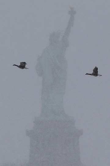 Birds fly near the Statue of Liberty during a storm seen from Liberty State Park, Monday, Jan. 26, 2015, in Jersey City, N.J. The Philadelphia-to-Boston corridor of more than 35 million people began shutting down as a winter storm, that could unload a paralyzing 1 to 3 feet of snow, moved through the northeast. (AP Photo/Julio Cortez)