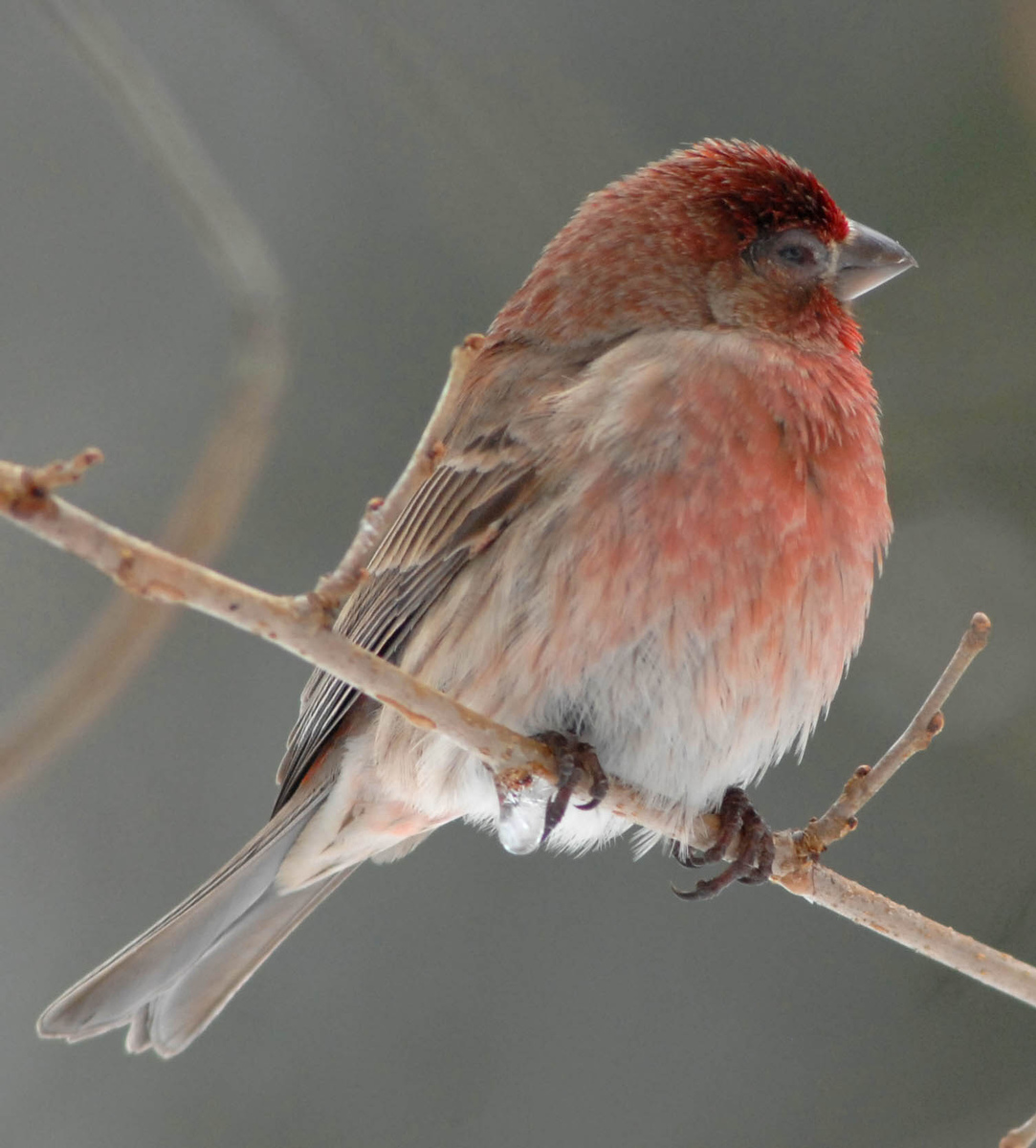 birds seek out backyard feeders in winter