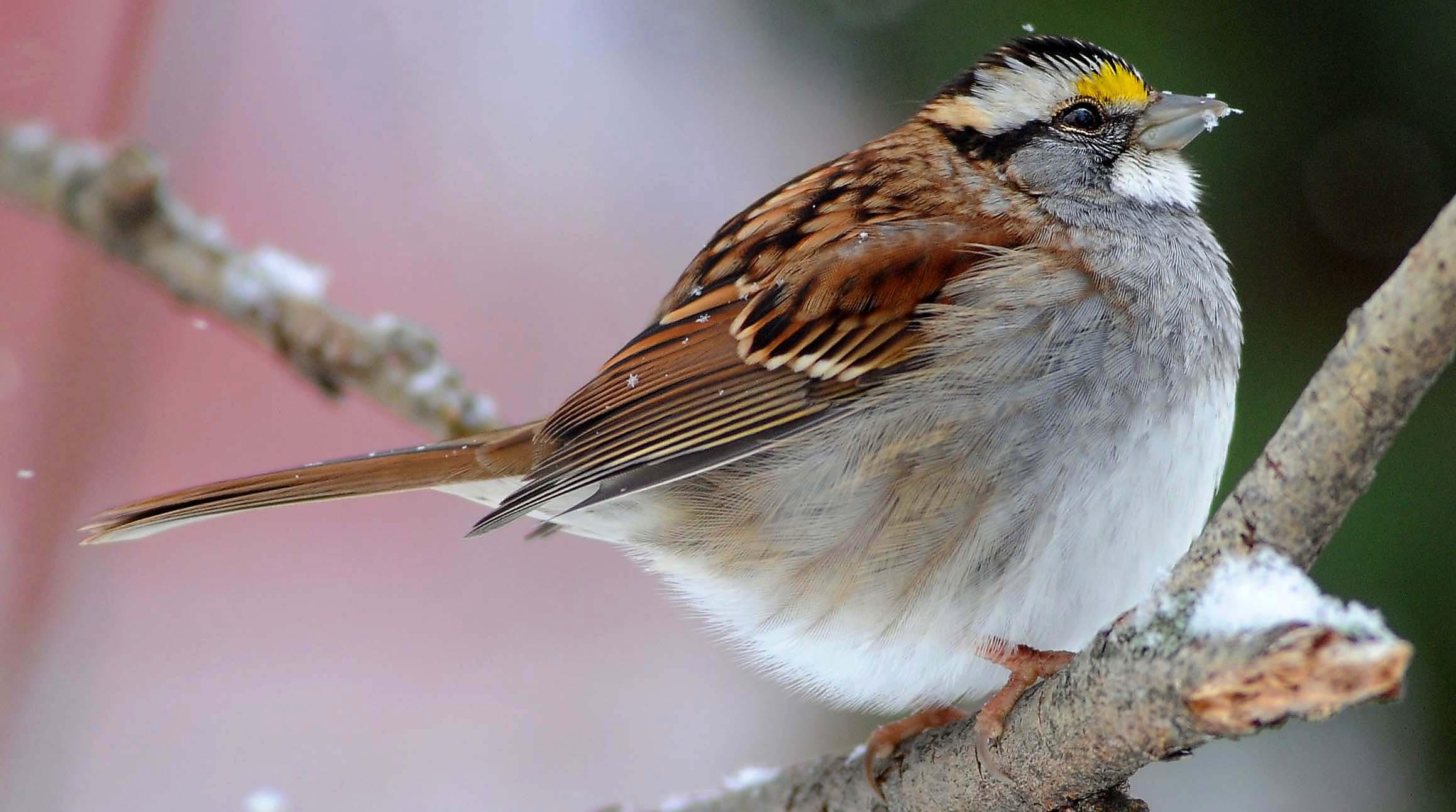 Birds seek out backyard feeders in winter