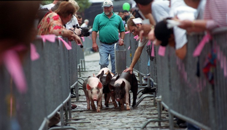 9/13/03: Six three-month-old pigs make their way along the cobblestones of McHenry St. in The 2nd Annual Pigtown Festival Running of the Pigs. They are followed by Tom Hartsock, Clarksburg, the farmer who raises them. (Kim Hairston/Baltimore Sun)