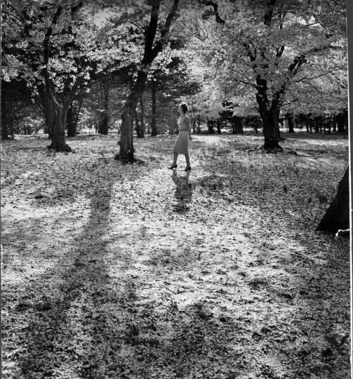 April 14, 1963: Cherry Blossoms