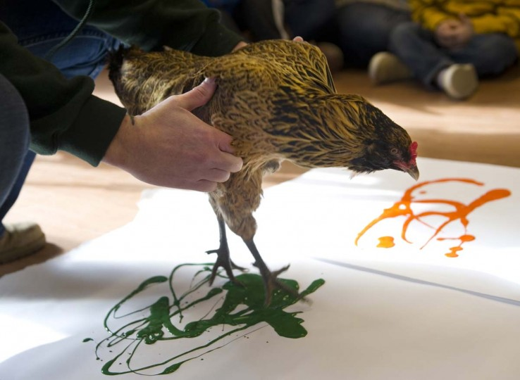 Ollie the Chicken is lowered onto her white paper canvas by Erin Gray, program animal curator at Wesselman Woods Nature Preserve in Evansville, Ind., so she can make another of her paint creations Thursday morning, Feb. 12, 2015.     CREDIT: THE EVANSVILLE COURIER & PRESS, DENNY SIMMONS - AP PHOTO