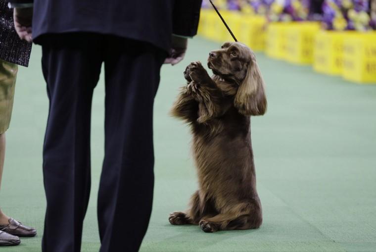 Westminster Dog Show  Winner Group