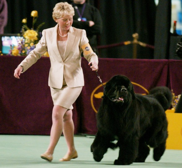 Eukanuba Dog Show Past Winners