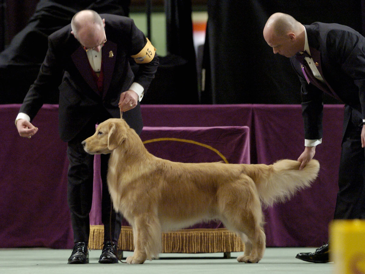 National Dog Show Madison Square Garden Garden Ftempo