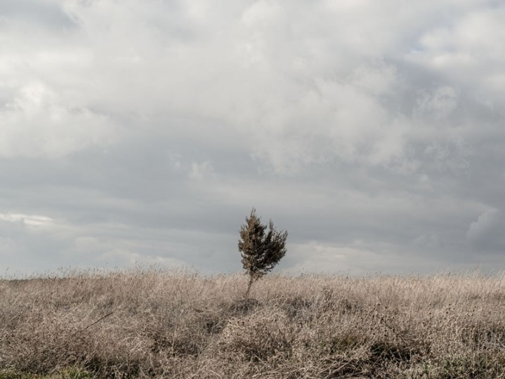 A lone tree stands outside the village of Iruecha on Feb. 14 near Molina de Aragon, Spain. (David Ramos/Getty Images)