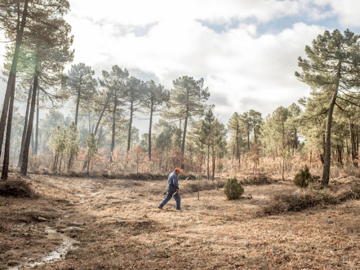 A worker walks on as he cleans the forest near the village of Cobeta on Feb. 24 near Molina de Aragon, Spain. (David Ramos/Getty Images)