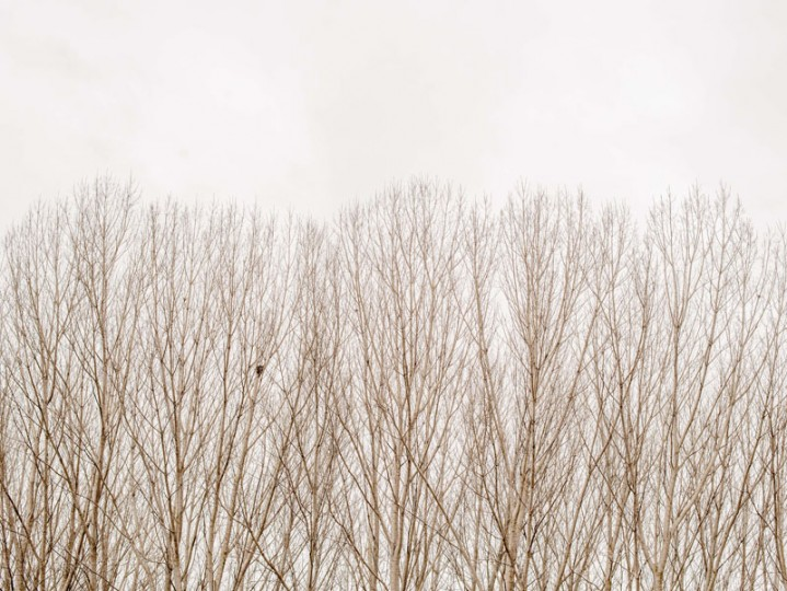 Poplar trees are seen outside the village of Luzon on Feb. 14 near Molina de Aragon, Spain. (David Ramos/Getty Images)