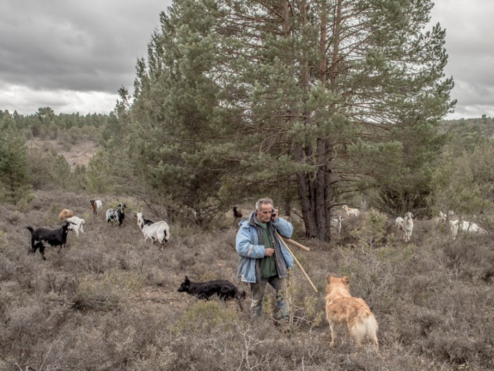 """Santiago """"Cani,"""" 55, talks with his wife by phone as he leads his flock to graze near the village of Cobeta on Feb. 24 near Molina de Aragon, Spain. (David Ramos/Getty Images)"""