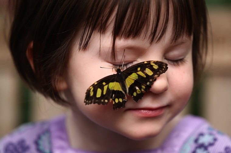 "A Malachite butterfly lands on the face of a girl during a photocall to highlight the forthcoming ""Sensational Butterflies"" exhibition at the Natural History Museum on Tuesday in London. The exhibition will run Thursday through Sept. 13 and features hundreds of tropical butterflies from around the world. (Carl Court/Getty Images)"