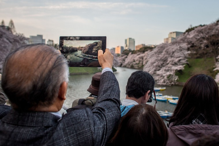 A man takes a photograph with his Ipad of blooming cherry blossom trees at Chidorigafuchi on March 31, 2015 in Tokyo, Japan. The Cherry blossom season begins in Okinawa in January and moves north through Feburary peaking in Kyoto and Tokyo at the end of March and lasting just over a week. (Photo by Chris McGrath/Getty Images)