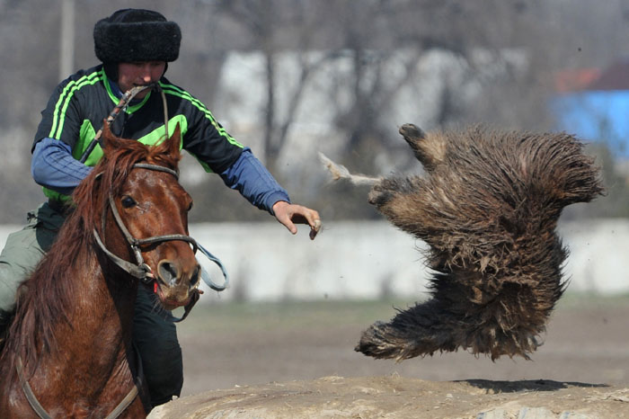 A Kyrgyz rider plays the traditional Central Asian sport Buzkashi, also known as Kok-Boru or Oglak Tartis, in Bishkek, Kyrgyzstan, on Tuesday. Mounted players compete for points by throwing a stuffed sheepskin into a well. (VYACHESLAV OSELEDKO/AFP/Getty Images)