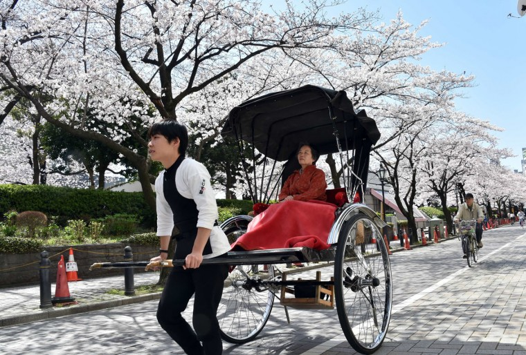 A tourist is taken for a ride in a rickshaw under fully bloomed cherry blossoms in Tokyo on March 31, 2015. Viewing of cherry blossoms is a national pastime and cultural event in Japan, where millions of people turn out to admire them annually. (Yoshikazu Tsuno/AFP/Getty Images)