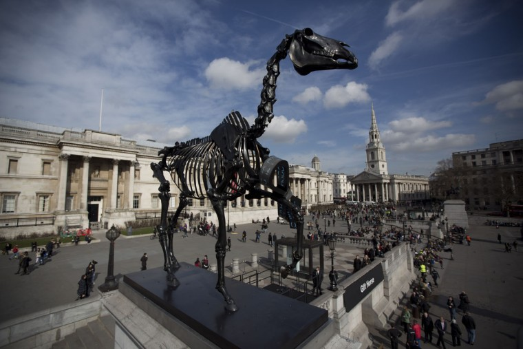 "The sculpture ""Gift Horse,"" which portrays a skeletal horse by German-born artist Hans Haacke, stands above Trafalgar Square after it was unveiled as the new commission for the Fourth Plinth, in London, Thursday, March 5, 2015. The 4.6 meter high bronze sculpture has an electronic ribbon attached to its front leg displaying a live ticker of the London Stock Exchange. (AP Photo/Matt Dunham)"