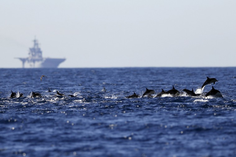 A pod of dolphins swim as the amphibious assault ship USS America sits on the horizon March 5 in waters off San Diego. (Gregory Bull/AP)