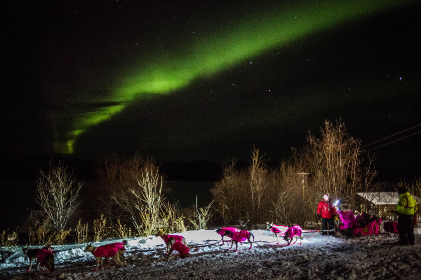 Northern lights over the Alaska Iditarod