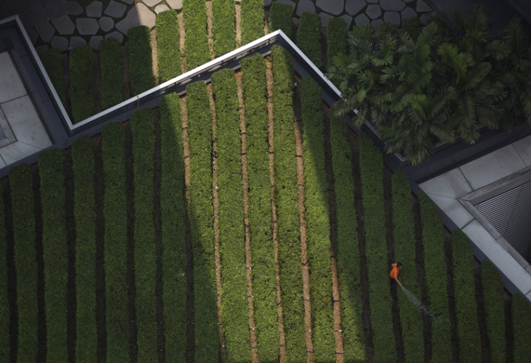 A maintenance worker waters a rooftop garden on a building in the central business district of Kuala Lumpur, Malaysia, on March 17. (Mark Baker/AP)