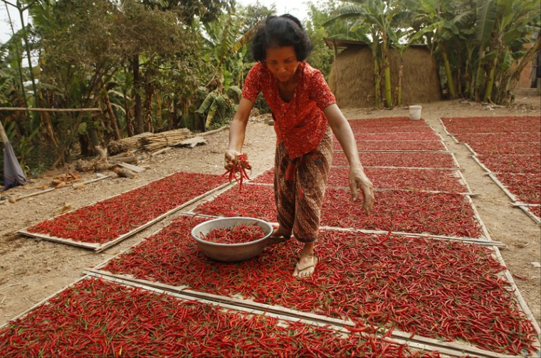A Cambodian woman dries chili pepper on the ground near the Mekong river at Russey Chroy village, Kandal province, north of Phnom Penh, on Tuesday. (Heng Sinith/AP)