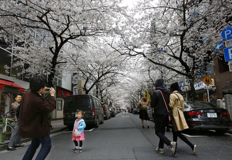 A man takes a photo under the blooming cherry blossoms near the Chidorigafuchi Imperial Palace moat in Tokyo, Sunday, March 29, 2015. (AP Photo/Shizuo Kambayashi)