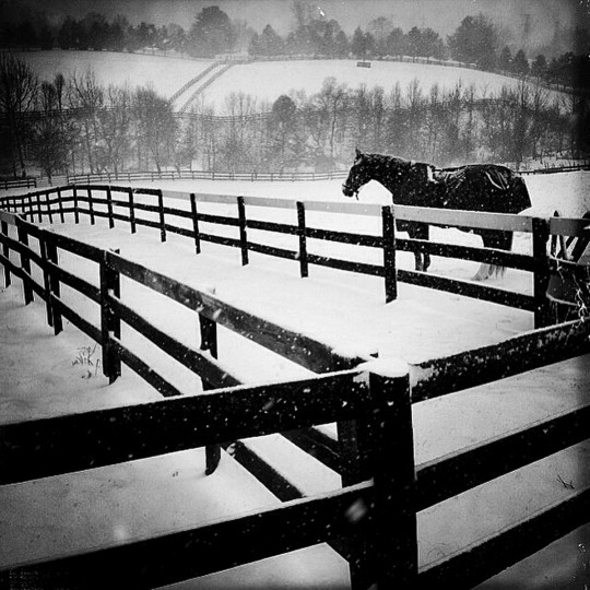 A Horse named, Rave, stands out in the snow at the Rutledge Farm in Fallston, MD.  (Lloyd Fox/Baltimore Sun)