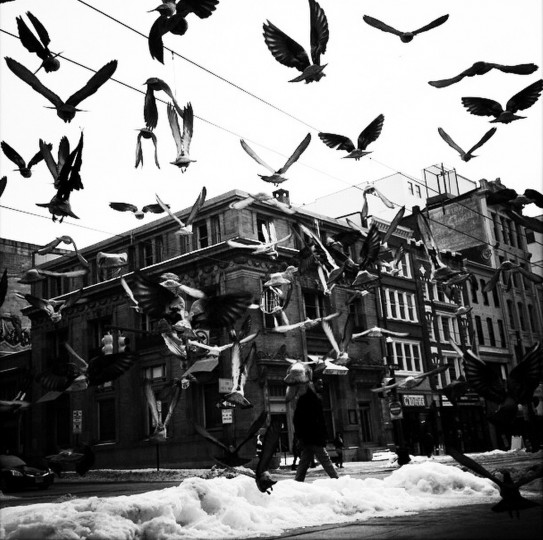 Flock of birds on Howard Street in Baltimore.  (Lloyd Fox/Baltimore Sun)