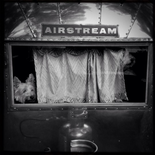 """Cooper and Chester keeping the watch from inside """"Ethel,"""" our 1963 Airstream Bambi. (Christopher T. Assaf/Baltimore Sun)"""