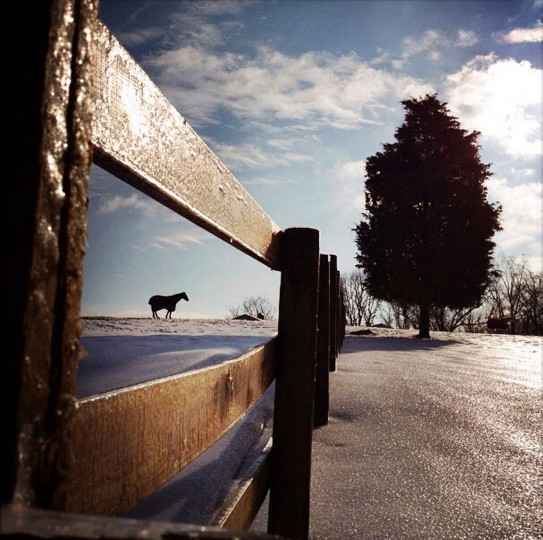 A horse enjoys the warm sun at the Graham Equestrian Center in Glen Arm. (Lloyd Fox/Baltimore Sun)