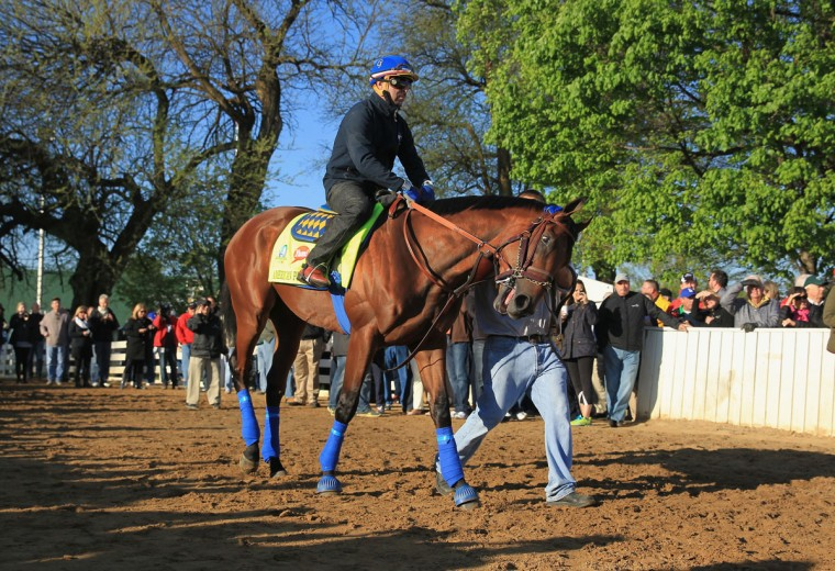 American Pharoh walks to the track during the morning training for the Kentucky Derby at Churchill Downs on April 28, 2015 in Louisville, Kentucky. (Photo by Andy Lyons/Getty Images)
