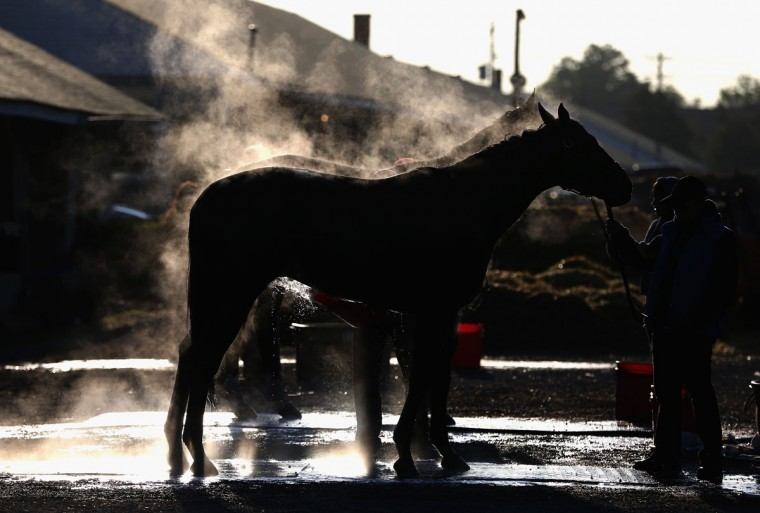 Horses are washed in the barn area during the morning training for the kentucky Derby at Churchill Downs on April 29, 2015 in Louisville, Kentucky. (Photo by Andy Lyons/Getty Images)