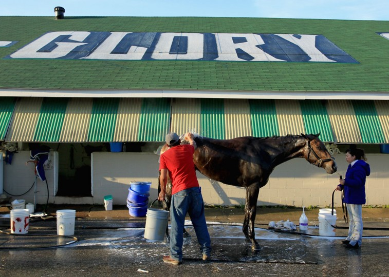A horse is washed in the barn area during the morning training for the kentucky Derby at Churchill Downs on April 29, 2015 in Louisville, Kentucky. (Photo by Andy Lyons/Getty Images)