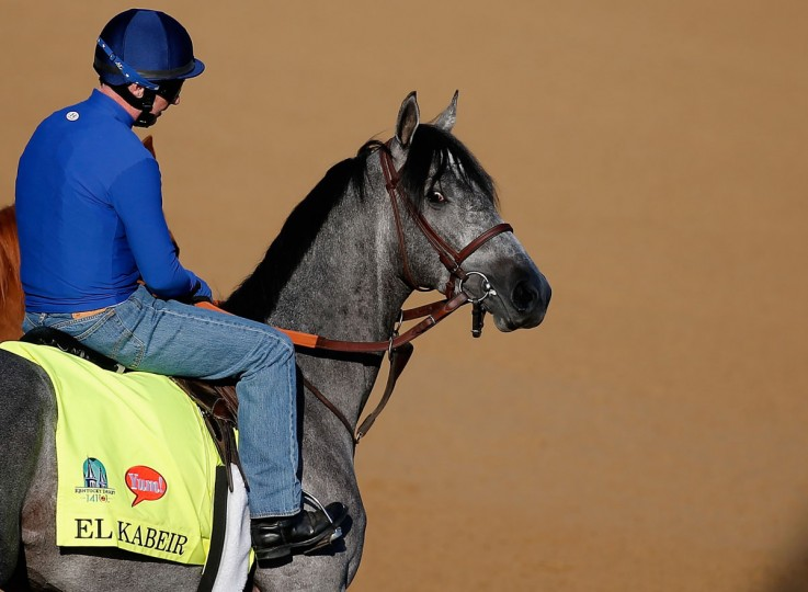 EL Kabeir walks onto the track during morning training for the Kentucky Derby at Churchill Downs on April 29, 2015 in Louisville, Kentucky. (Photo by Rob Carr/Getty Images)