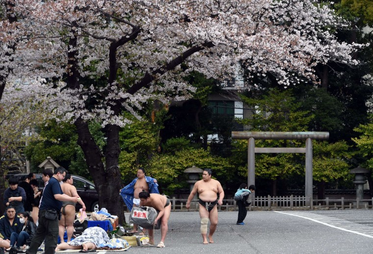 "Sumo wrestlers prepare for a sumo exhibition underneath cherry blossom trees at the Yasukuni shrine in Tokyo on April 3, 2015. Sumo wrestlers took part in a ""honozumo"", a ceremonial one-day exhibition for hundreds of spectators held within the shrine's precincts. (Toshifumi Kitamura/AFP/Getty Images)"