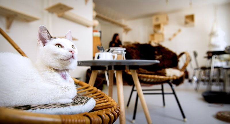 Bilderesultat for amsterdam cat cafe