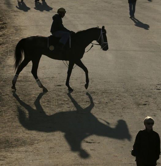 A horse comes off the track after a morning workout at Churchill Downs Tuesday, April 28, 2015, in Louisville, Ky. (AP Photo/Charlie Riedel)