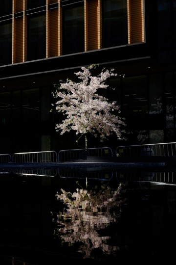 A tree in full bloom is reflected in a water feature outside a new office block just north of King's Cross railway station, London, Tuesday, April 14, 2015. The area north of King's Cross is undergoing dramatic redevelopment after 150 years of industrial use, with the construction of offices, housing, retail space as well as new parks and squares. (AP Photo/David Azia)