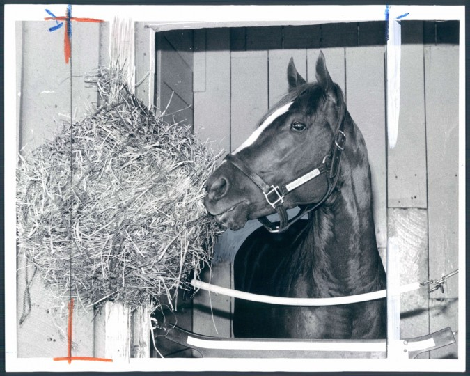 General Assembly seems perfectly content as he chomps away at lunch in the stall at Pimlico. (Joseph A. DiPaola/Baltimore Sun, 1979)