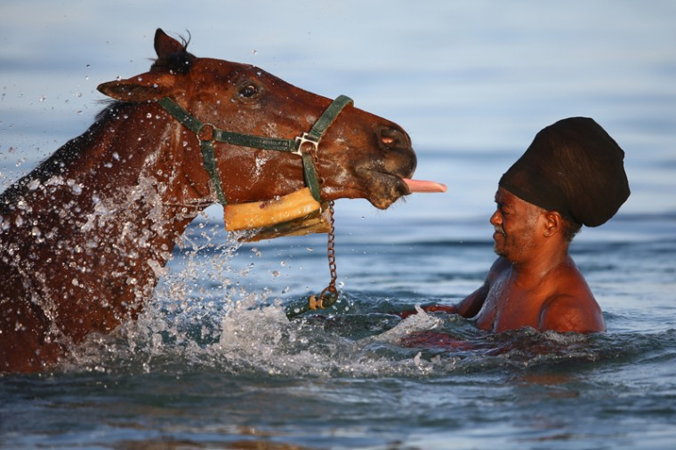 Race horses stabled at the nearby Garrison course are taken by grooms to the sea for aerobic exercise and recovery on Saturday.Trainers consider the aerobic exercise a break from trackwork and monotony of being confined to the stables and vital in the horses' fitness preparation. (Michael Steele/Getty Images)