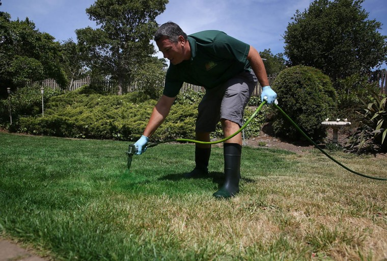 Brown Lawns Green owner Bill Schaffer applies green paint to a brown lawn on May 29, 2015 in Novato, California. As the severe California drought continues to worsen, homeowners and businesses looking to conserve water are letting lawns go dormant and are having them painted to look green. The paint lasts eight weeks on dormant lawns and will not wash off. (Justin Sullivan/Getty Images)