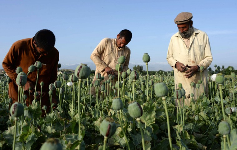 Afghan farmers harvest opium sap from a poppy field in Surkh Rod District, of Nangarhar province near Jalalabad on Tuesday. Opium poppy cultivation in Afghanistan reached a record high in 2014, a UN report has revealed, highlighting the failure of the U.S.-led campaign to crack down on the lucrative crop. The total area under cultivation was about 553,500 acres in 2014, a seven percent increase over the previous year, according to the Afghanistan Opium Survey released by the UN Office on Drugs and Crime. (Noorullah Shirzada/AFP/Getty Images )