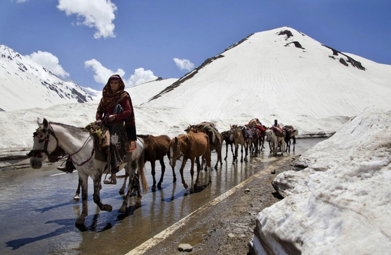 An elderly Kashmiri Bakarwal woman leads a heard of horse near Peer Ki Gali, 80 kilometers (50 miles) south of Srinagar, India, Wednesday, May 20, 2015. Bakarwals are nomadic herders of India's Jammu-Kashmir state who wander in search of good pastures for their cattle. Every year in April-May more than one hundred thousand people from the nomadic Bakarwal tribes arrive in the meadows of Kashmir and parts of Ladakh from areas of the Jammu region with their flocks of cattle and sheep. After crossing snowy mountains with their cattle and belongings, Kashmir valley's lush green meadows become their home from April to September, after which they begin their return journey. This seasonal shifting of ìhomesî ensures a regular flow of income for the families. (AP Photo/Dar Yasin)