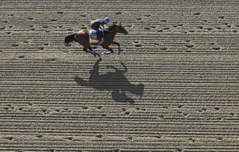 Kentucky Derby winner American Pharoah, with exercise rider Jorge Alvarez aboard, gallops at Pimlico Race Course in Baltimore, Thursday, May 14, 2015. The Preakness Stakes horse race is scheduled to take place May 16. (AP Photo/Patrick Semansky)