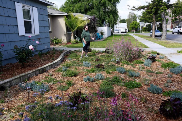 Denise Hurst shows her drought-tolerant garden she planted with the help of a city program that offers rebates of $3.50 per square foot for residents who tear up their water-guzzling lawns and plant drought-resistant plants that require little to no watering in Long Beach, Calif. A cash-for-grass program is proving so popular during California's drought that a water wholesaler is considering boosting the budget for turf replacement rebates. Board members of the Metropolitan Water District of Southern California will meet Tuesday, May 26, 2015, to discuss adding $350 million to its lawn rebate program. (Nick Ut, AP photo)