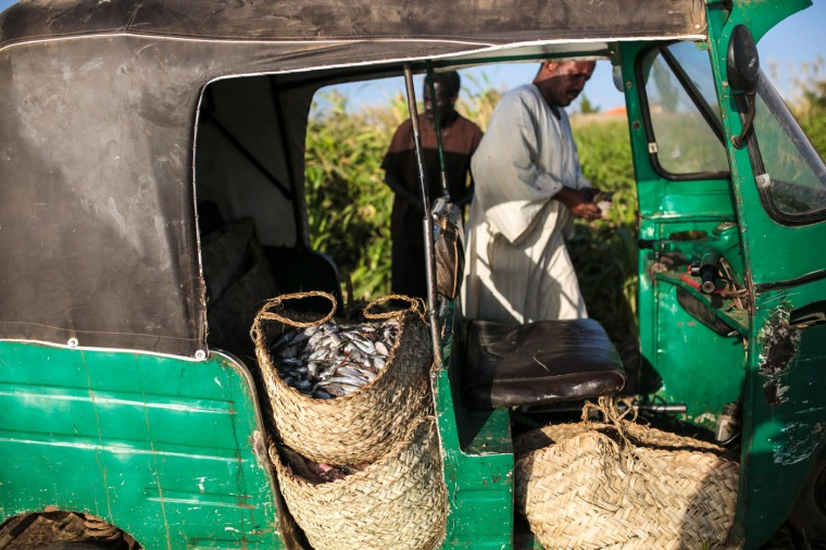 In this Wednesday, April 15, 2015 photo, Sudanese fishermen prepare to transport their fish in a Tuk-Tuk after washing them by the Nile River bank, in Omdurman, Khartoum, Sudan. Fishermen can catch up to 100 kilograms (221 pounds) of fish on a really good day, but most days average around 50 kilograms. (AP Photo/Mosa'ab Elshamy)