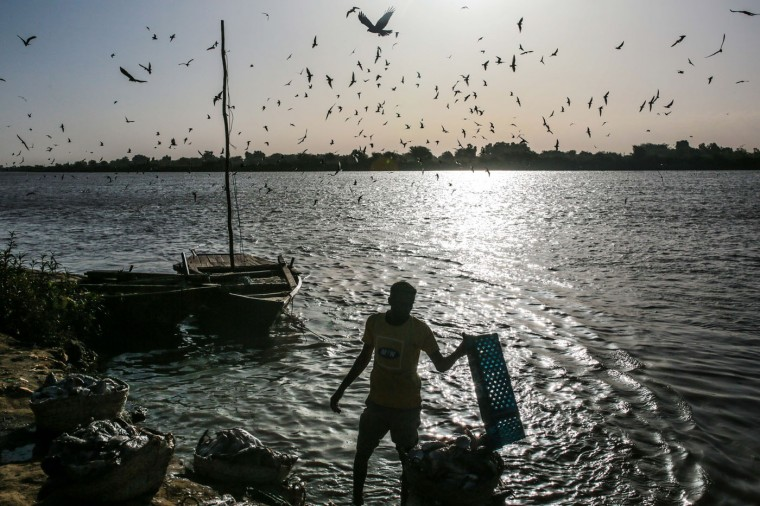 """In this Wednesday, April 15, 2015 photo, birds circle above a Sudanese fisherman as he washes his day's catch in the early morning hours by the Nile River bank, in Omdurman, Khartoum, Sudan. The river fishermen are in competition with their deep-water counterparts on the Red Sea coast. """"The Nile is gentle,"""" fisherman Hamad al-Nil says with a smile, whereas """"the sea is dangerous."""" (AP Photo/Mosa'ab Elshamy)"""