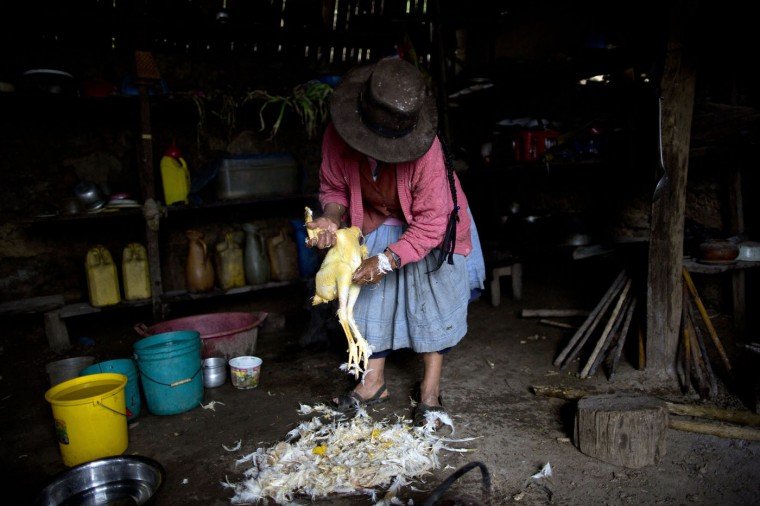 In this March 15, 2015 photo, Rufina Galvez plucks a chicken in preparation for a special dinner to mark the second anniversary of her son's death, in La Mar, province of Ayacucho, Peru. Yuri, a cocaine backpacker, always checked in by phone she said. So when he didnít call after a March 2013 smuggling trip, his mother turned to reading coca leaves to try to divine his fate, tossing them on her skirt as is customary. ìThe leaves fell spine-up, a bad sign,î she said. (AP Photo/Rodrigo Abd)